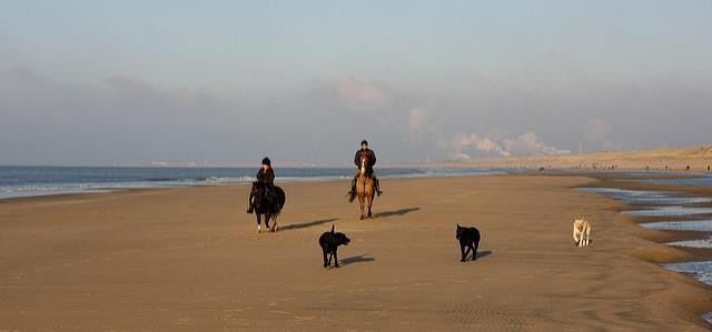 ausritt, strand, reiter und hund