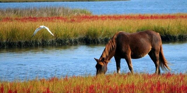 pferdesteuer, pfedesteuer abgelehnt, kreisbauernverband