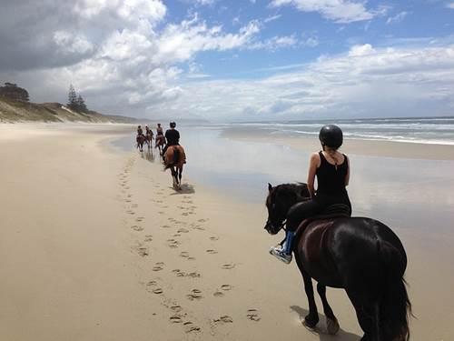 ausritt am strand, pferde am strand, wattritt, reiten neuseeland