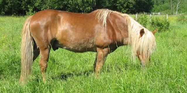 weide hufrehe, gras fruktan hufrehe, fressbremse pferd, hufrehegefahr, hufrehe frühling, gras zuckergehalt