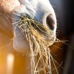 pferdefutter, pferde richtig ernähren, pferd heu