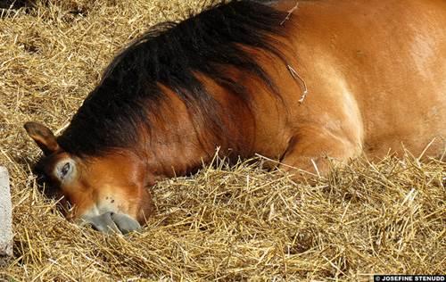^pferd box, pferd im stroh, stroh für pferd, pferdebox