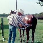 pferde richtig waschen, pferde dusche, pferdepflege