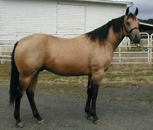 reiter, pferd, pferdesport, distanzpferd, sportpferd