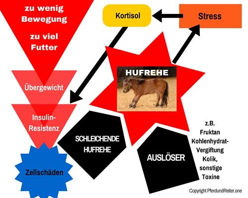 hufrehe pferd, hufrehe pony, equines metabolisches syndrom pferd, ems pony
