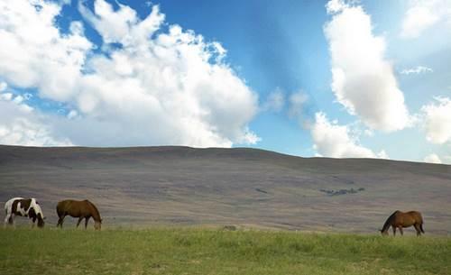 wildpferde, koppel, pferdeweide