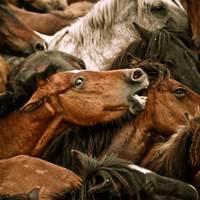 herde pferd, gruppe pferd, pferde, reiter, pferd und reiter