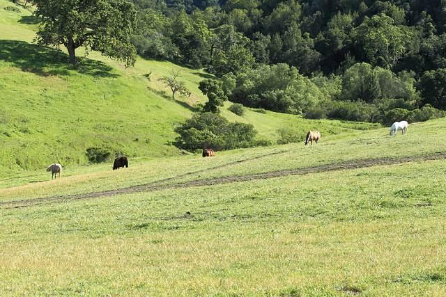 pferdeherde, weide pferde, koppel, pferde auf der weide